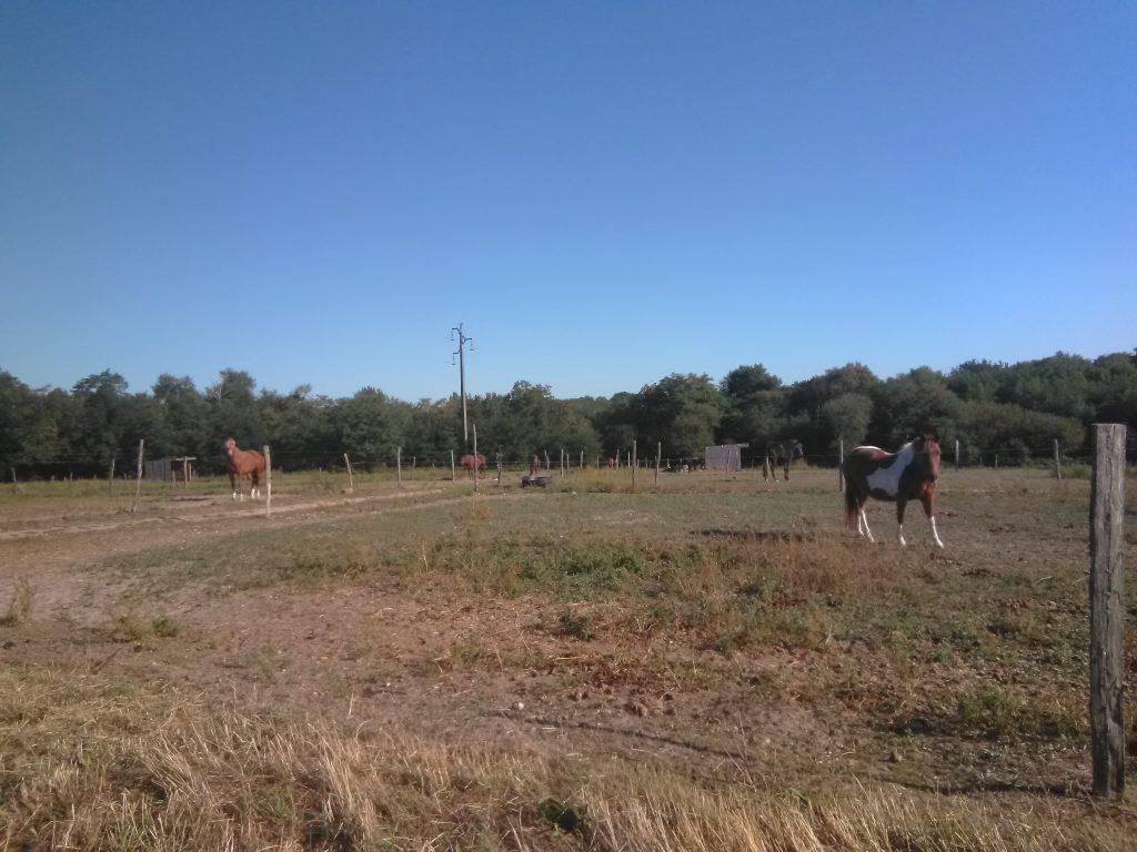 chevaux dans un pré